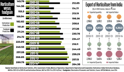 India's vegetable production